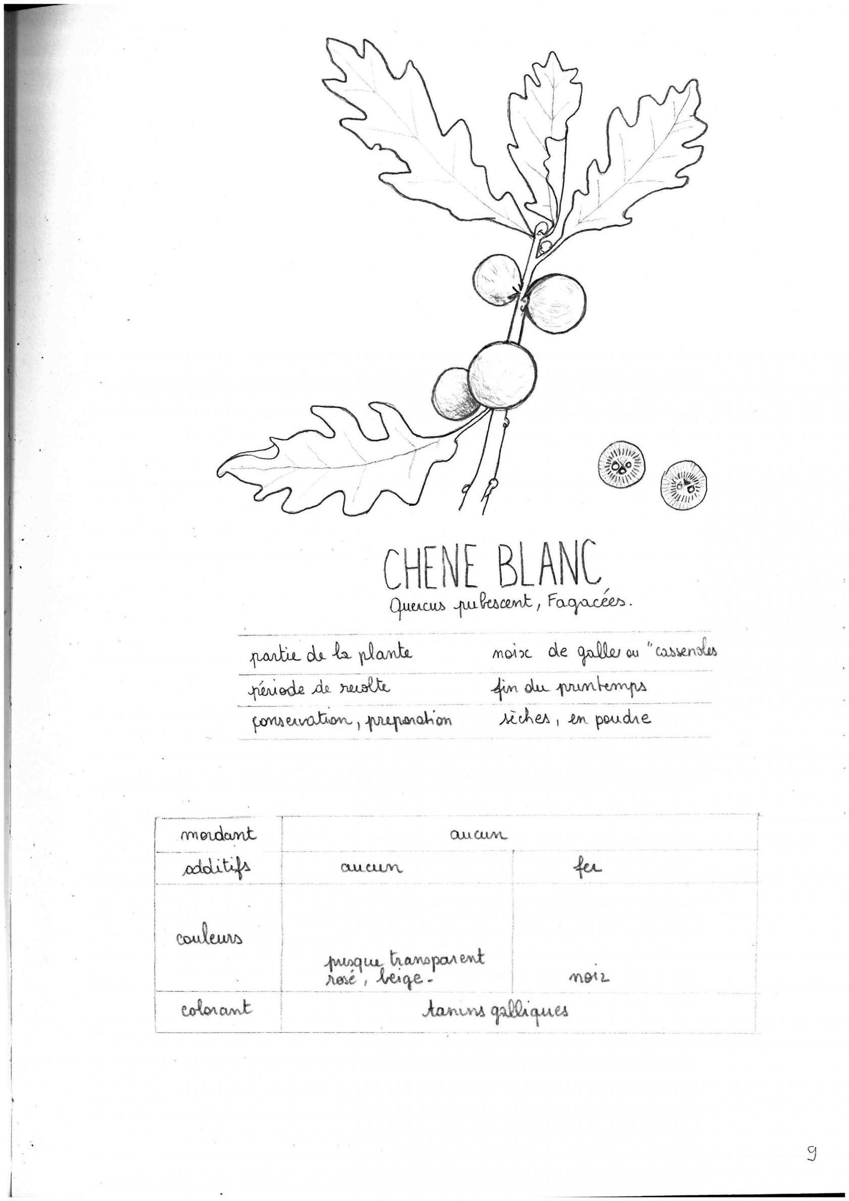 cheneblancp9.jpg